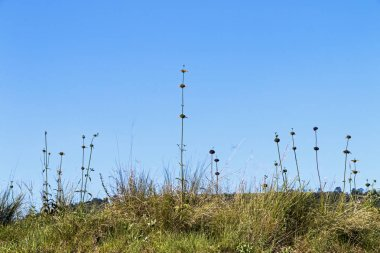Tall Plant Stems and Green Grass Against Blue Sky