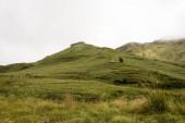 Grasbewachsenes Feld am Fuße der Berge