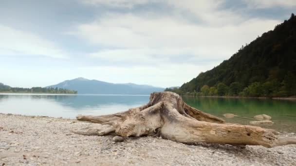 Časovým odstupem video staré bílé pařez na pláži Alpy jezera. Bílý štěrk v zátoce. Zvedl pohled kamery. Modro-zelené vody, zrcadlo hladiny vody. Vrcholky hor v pozadí