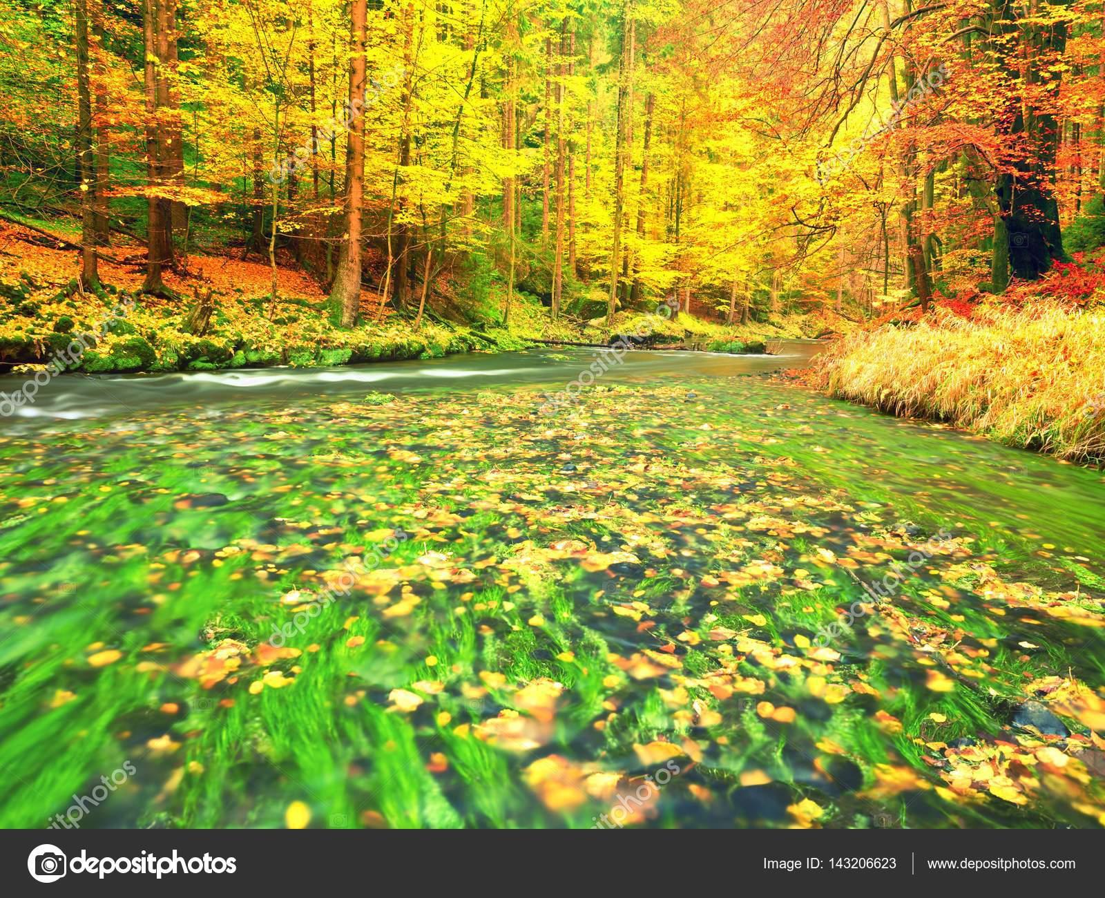 Fall river. Autumn season at mountain river. Green algae — Stock ...