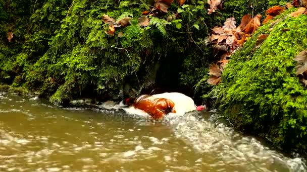 Zpomalený pohyb. Plastové láhve v pěna zapnutí špinavá voda pod peřejemi. Strašlivý zápach bahnité vody. Kamenná stěna peřejí
