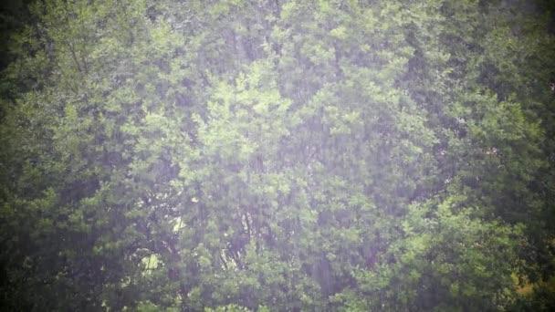 Silný déšť přichází. Pohled na padající kapky v listí stromů pozadí