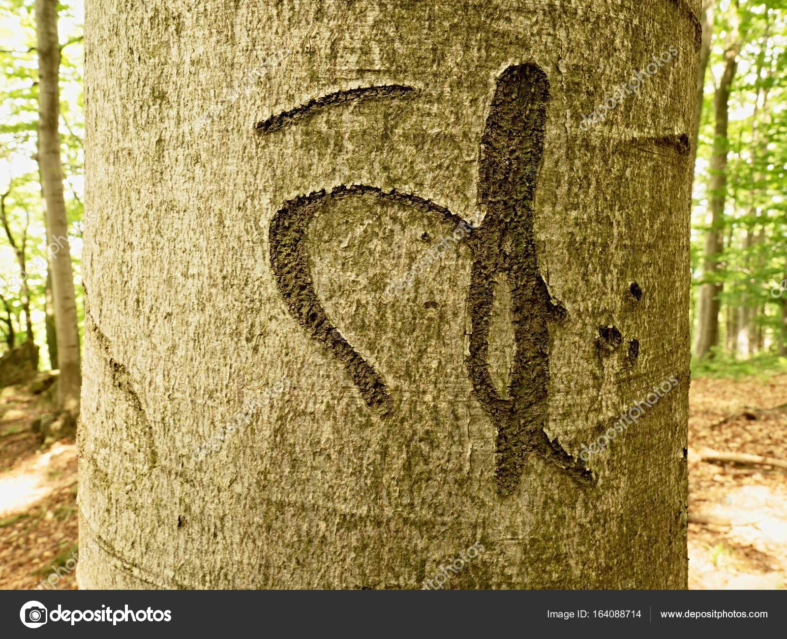 Chinese Or Japanese Letter Knife Carving On Tree Bark Tree