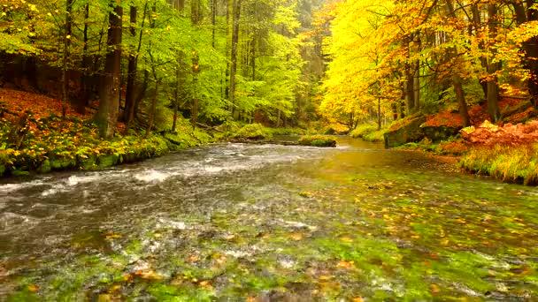 Podzimní krajina, barevné listí na stromech, ráno na řece po deštivé noci. Barevné listí. Podzimní proud. Lesní řeky. Listopadu scéna. Na podzim ráno řeka. Barvy z řeky. Příroda na podzim.