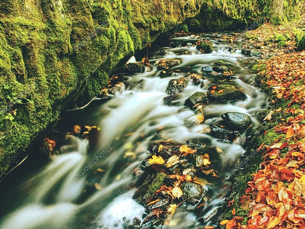 Weir in mountain stream. Colorful leaves  on stones in cold dark water. Shinning bubbles