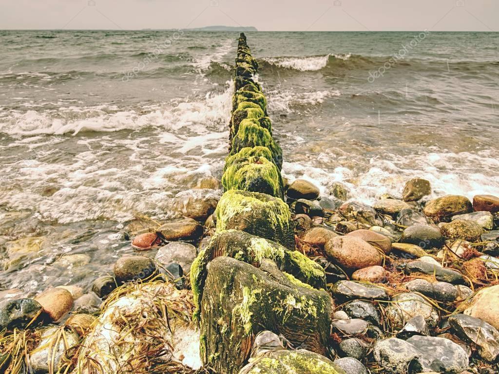 Mossy breakwater poles in foamy water of sea.  Sandy beach wit algae,
