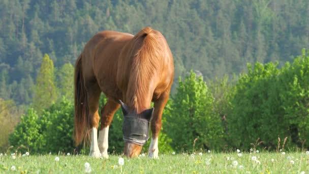 Silný světle hnědý kůň s maskou na ochranu hlavy se pasoucí na pastvinách. Kůň stojí na poli v letním období v masce.
