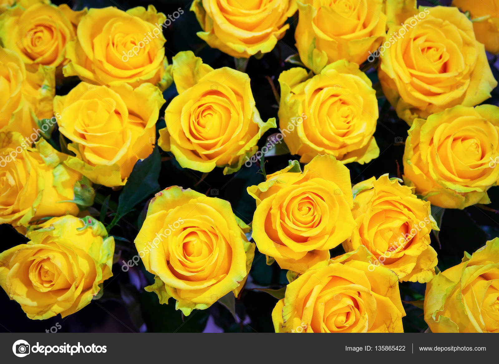 Yellow Roses Flowers Floral Background For Mothers Day Wedding