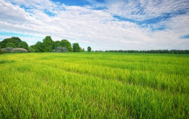 Beautiful green field with blue cloudy sky.