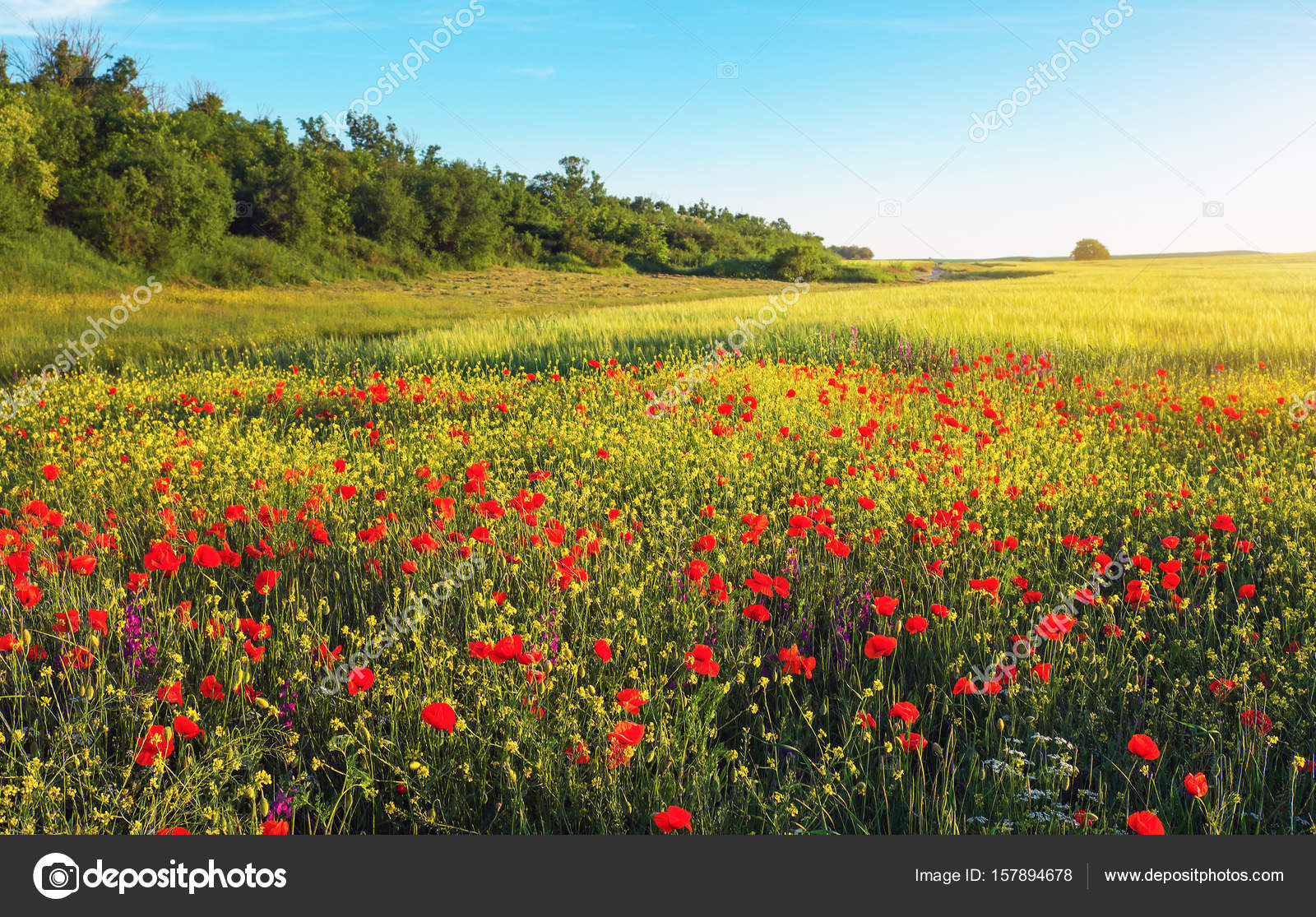 Spring Flowers In Field Beautiful Landscapes Stock Photo