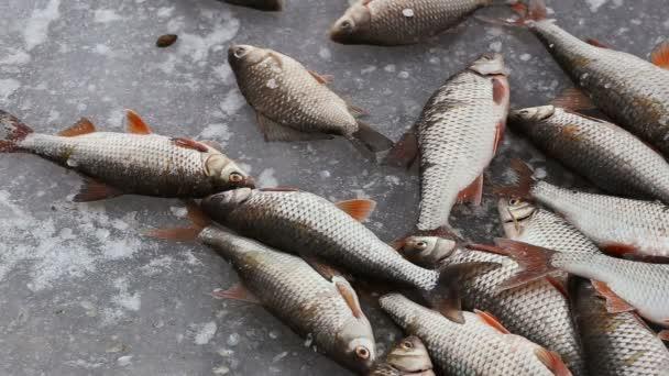 Zimní rybolov. Ryby se pohybuje a zamrzne na studený LED. Rybář úlovku. Rybářů chytil roach