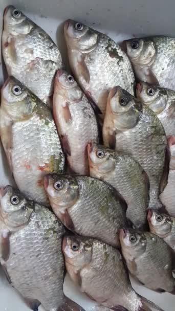 Spousta ryb na talíři, ryby, které nenasytně hltají vzduch. Sladkovodní ryby dýchají svými ústy
