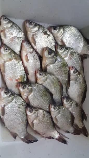 édesvízi nagy hal, amely mohón szívja a levegőt és a száján keresztül lélegzik. Sok hal van a tányéron.