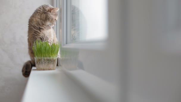 Šedá kočka sedí na okenním parapetu