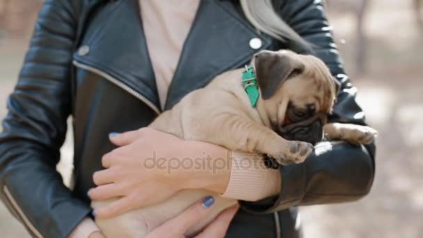 Aranyos kiskutya mopsz a womans kézen