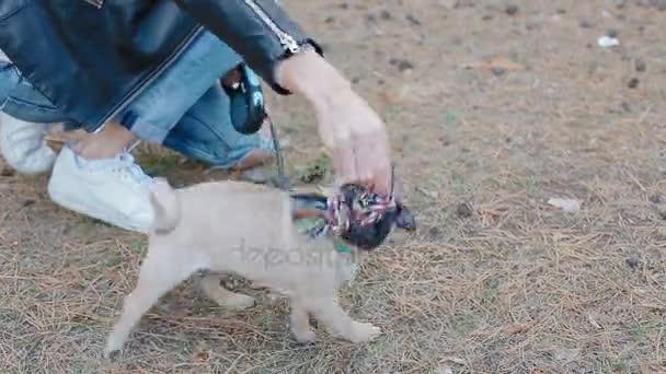 Fehér asszony játszó kiskutya mopsz szabadban