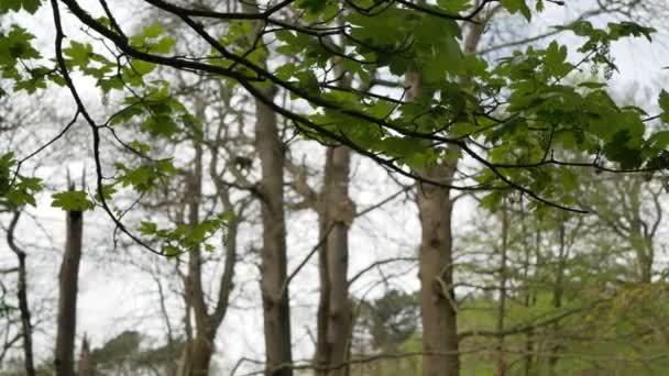 Strom větev se zelenými listy kymácející se ve větru