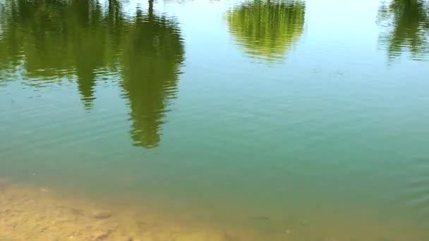 Zöld tó vízfelülete természet
