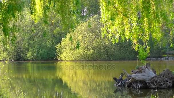 Zelené jezero vodní hladiny v přírodě