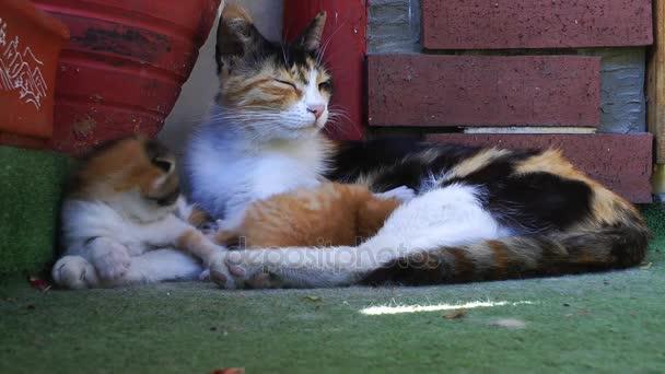 Édes aranyos cica macska