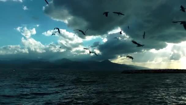 Állati madár Seagulls repülés