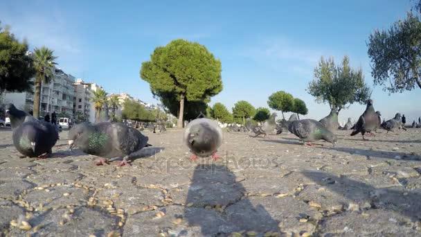 Galambok galambok madár repül állat