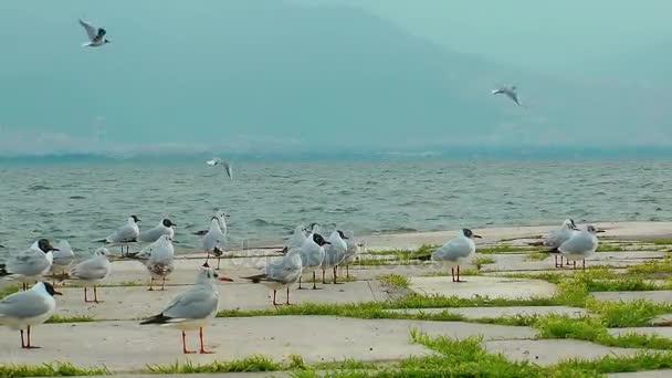 Seabird Seagulls and Pigeons Flying Animal