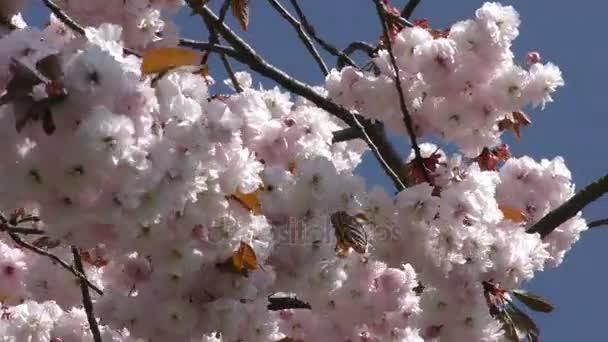 Krásný květ květiny Flora v matku přírodu
