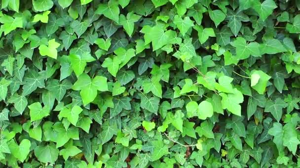 Krásné listy rostlin na strom Příroda Flora koncept