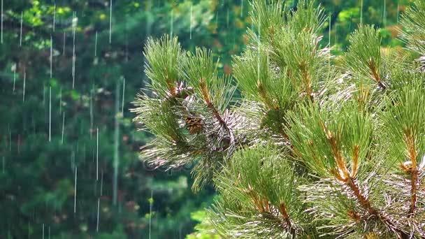 Hatalmas fát, a zöld természetben