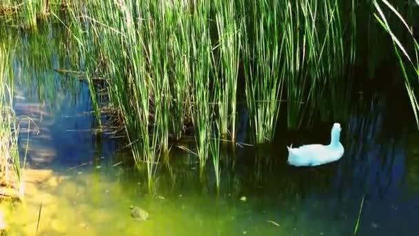 Vogel Tier Schwan in der Natur
