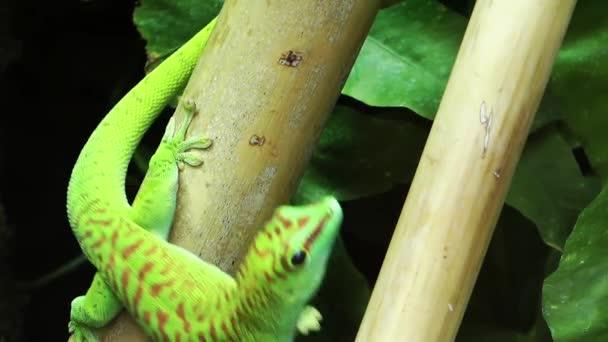 Ještěrku zelenou zvíře na stromě