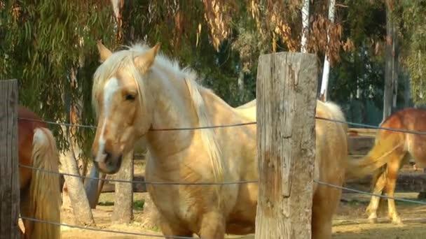 Állati lovak az istálló