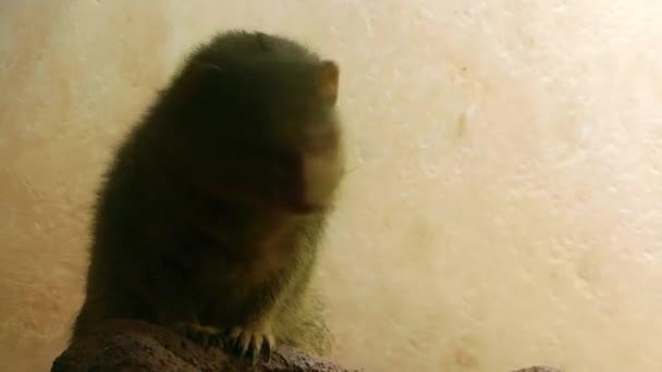 Animal Racoon in Zoo