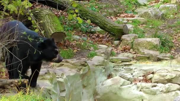 Medvěd v přírodě v Zoo