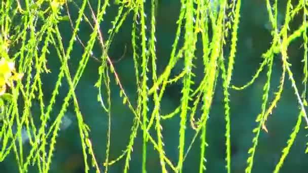 Listy v zeleni