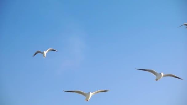 Gabbiano in volo animale