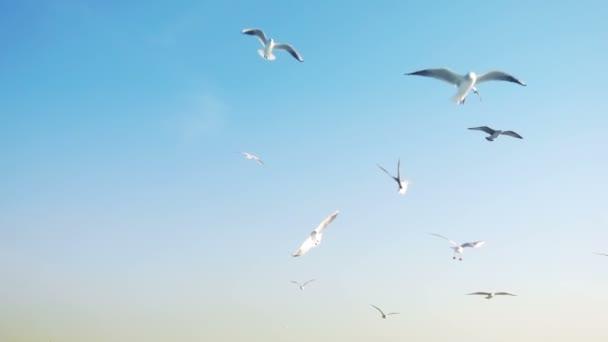 Állati madár sirály repülés