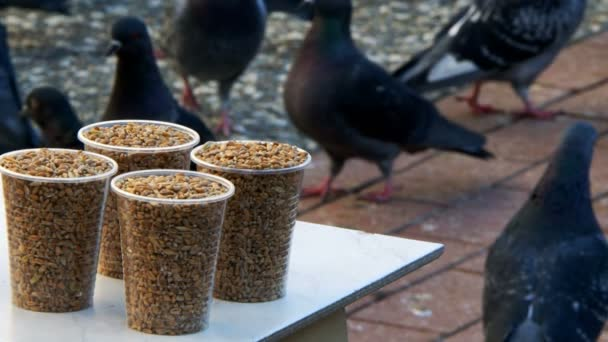Bird Food and the Pigeons