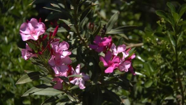 Fialové květy v zelené přírodě