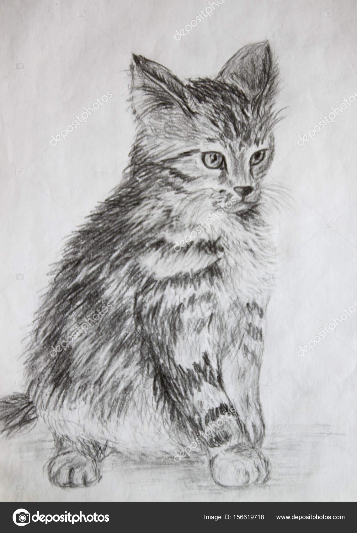 Gato Gato Asustado Dibujo Dibujo A Lápiz Fotos De Stock Alna3
