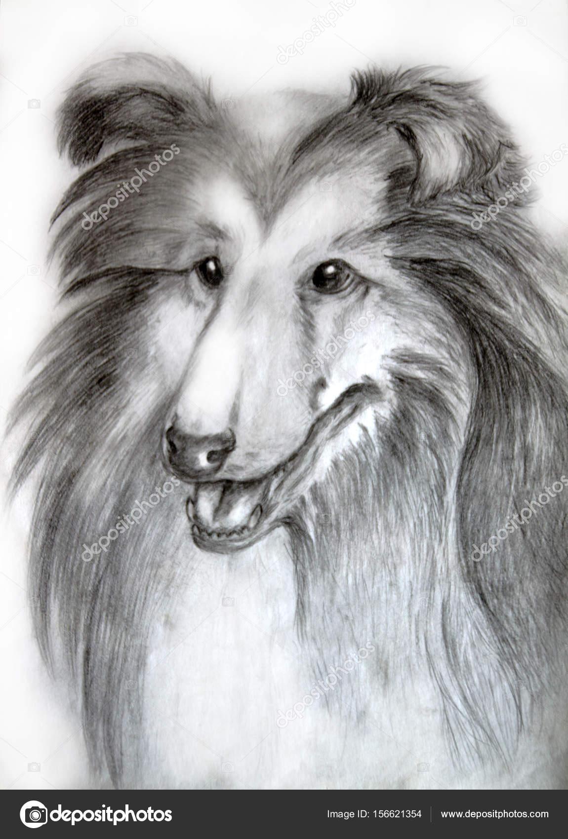 Dibujos Perros A Lapiz Collie De Pelo Largo De Los Dibujo Perro