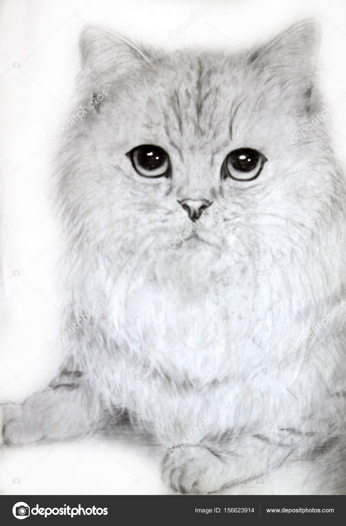 Pencil drawings of a gentle cute cat stock photo