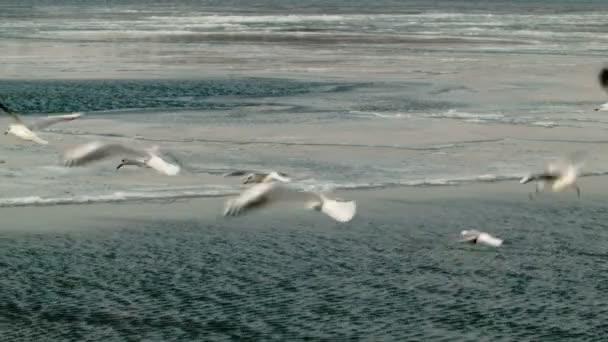 racky letící nad zamrzlou řeku