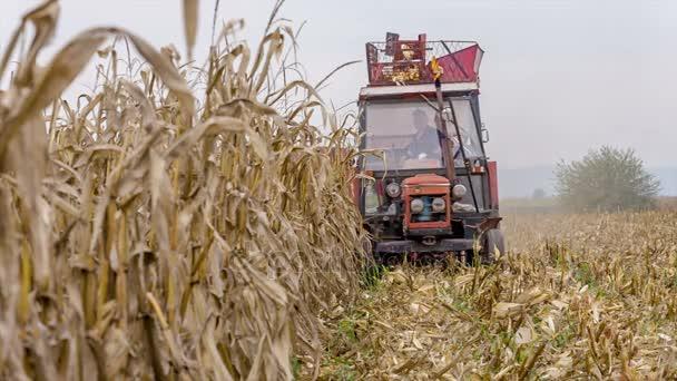 Tractor harvesting corn