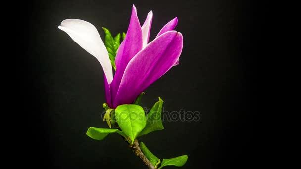 květinářství Magnolia