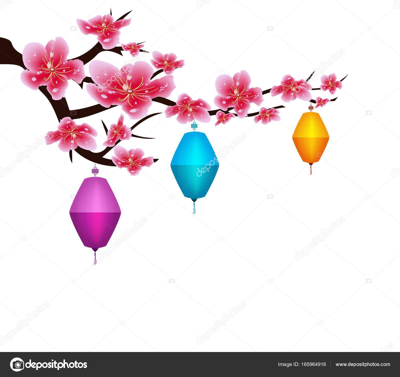 sakura flowers background cherry blossom lantern isolated white background chinese new year stock
