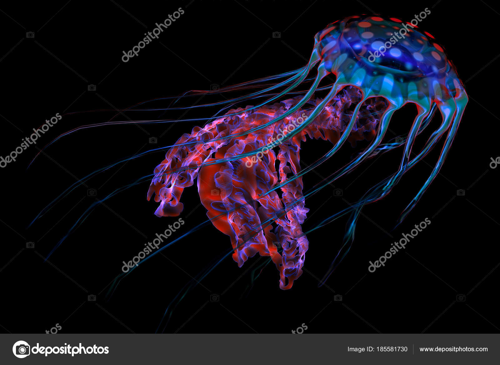Blue Red Jellyfish on Black — Stock Photo © CoreyFord #185581730
