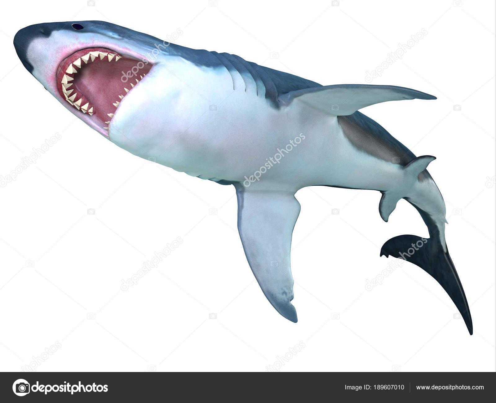 Megalodon Shark Underbelly — Stock Photo © CoreyFord #189607010