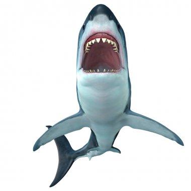 Megalodon Shark Front Profile